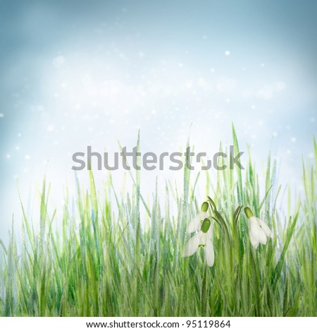 Winter or early spring nature background with frozen grass and Snowdrop Galanthus flowers . Spring floral background - stock photo