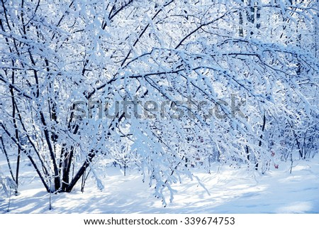 winter park forest background - stock photo
