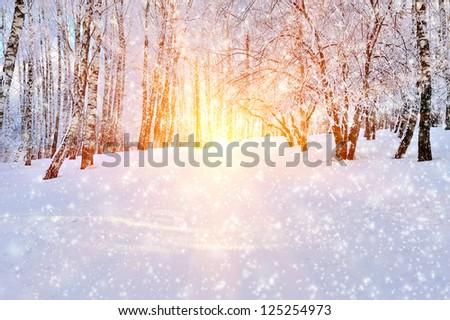 Winter park in snow in sunny day - stock photo