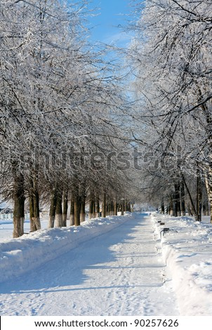Winter park in sunny cold day - stock photo