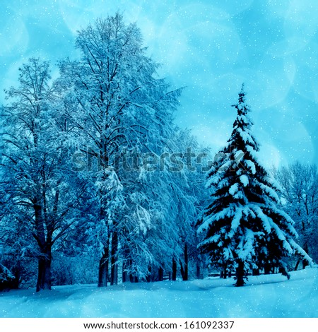 Winter picture , scenery with trees in cold day  - stock photo