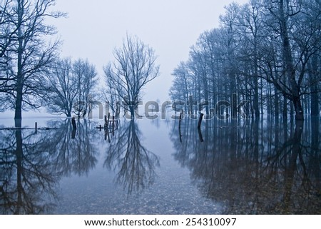 Winter reflection of the flooded forest  - stock photo