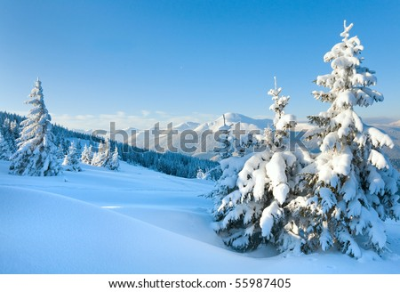 winter rime and snow covered Christmas fir trees on mountainside (Carpathian Mountains, Ukraine) - stock photo