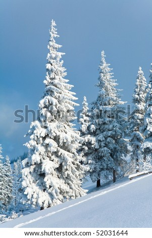 winter rime and snow covered fir trees on mountainside on overcast sky background - stock photo