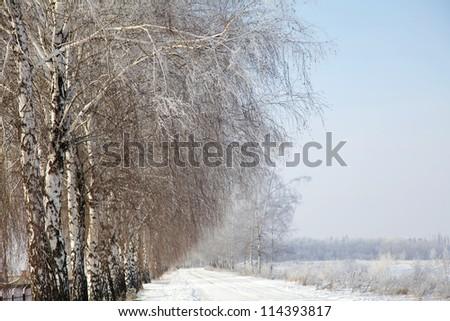 Winter road and birch tree - stock photo