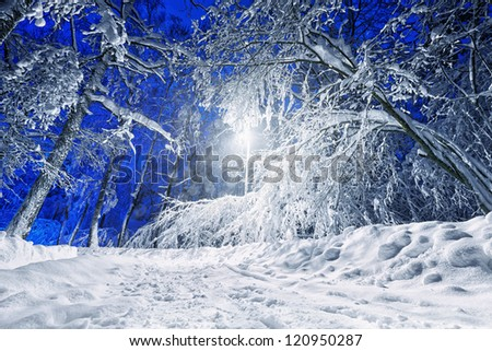 Winter road lit with streetlight in night - stock photo