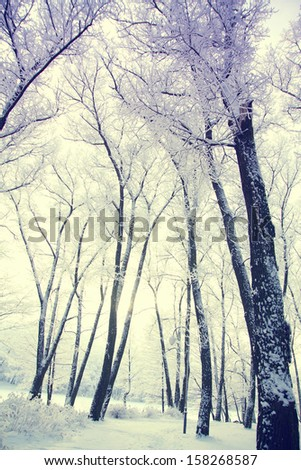 Winter's Tale - stock photo