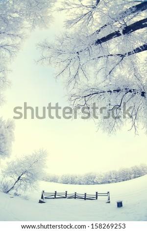 Winter's Tale. fisheye - stock photo