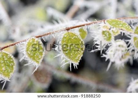 Winter scene in a park - stock photo