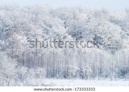 winter scene near Owen Sound Ontario Canada trees in a snow covered field - stock photo