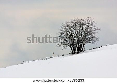 Winter scene of lonely tree - stock photo