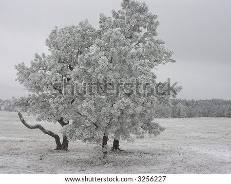 Winter scene of trees iced andfrosted - stock photo