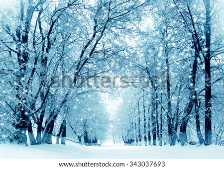 Winter scenery, frosty trees in a city park - stock photo