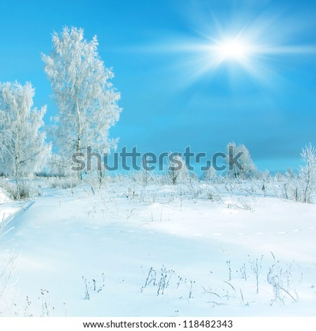 Winter scenery, hoarfrost on a trees and snowdrifts and sun - stock photo