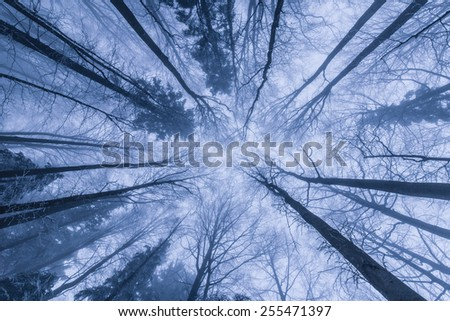 Winter scenery in the forest with birch trees and fog -dreamy effect - stock photo
