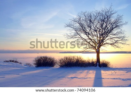 Winter sea sunset and tree in Finland - stock photo