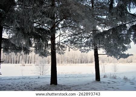 Winter Siberian city park, Omsk region  - stock photo