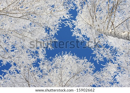 Winter snow branch blue clear sky - stock photo