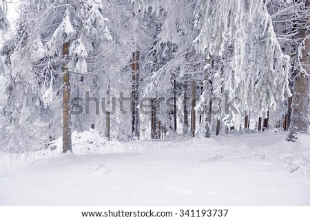 Winter snow-covered forest - stock photo