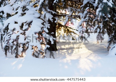 Winter. Snow. Mountains. Winter in the mountains. Eli in the snow. - stock photo