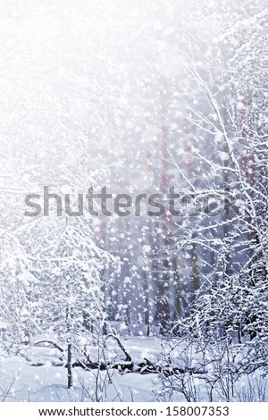 Winter. Snowfall. Photo. - stock photo