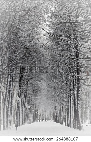Winter snowy day in park - stock photo