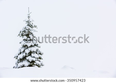 Winter snowy spruce, winter holidays - space for text - stock photo