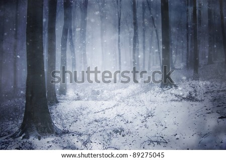 winter storm in a forest in winter - stock photo