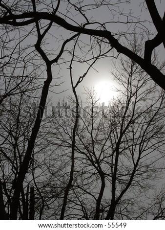 winter sun - stock photo