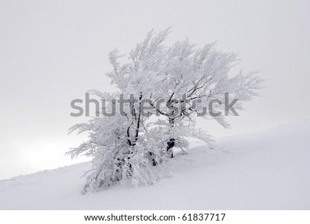 Winter tree - stock photo
