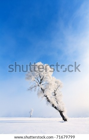 Winter tree - stock photo