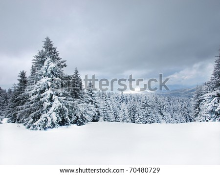 Winter tree boron / mountain ski center Kopaonik Serbia / wide landscape - stock photo