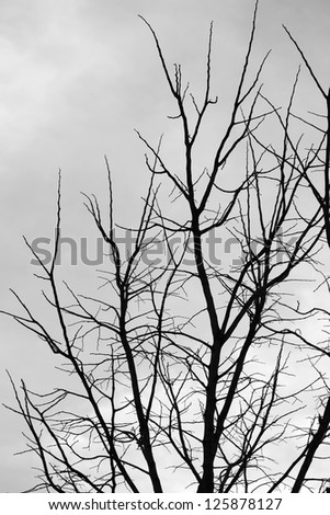 winter tree branches silhouette - stock photo