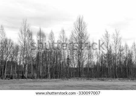 Winter tree conceptual image. Black and white photo of dead winter tree. - stock photo
