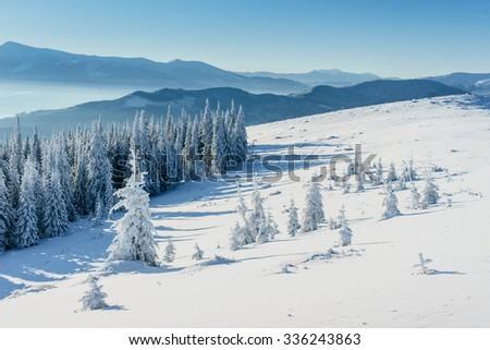 Winter tree in snow - stock photo