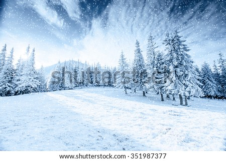 Winter tree in snow.  Carpathian, Ukraine, Europe. Bokeh light effect, soft filter. Instagram toning effect. - stock photo