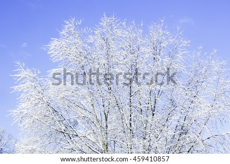 Winter trees covered by a load of snow - stock photo