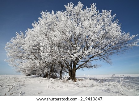 Winter trees in hoarfrost sunny day. Christmas winter background with snow-covered trees. - stock photo