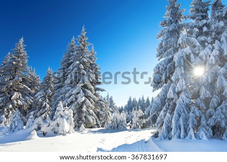 Winter trees in mountains covered with fresh snow, with sunshine - stock photo