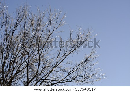 Winter trees, trees in winter, trees covered with ice - stock photo