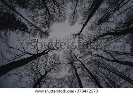 Winter treetops, gloomy and dark - stock photo
