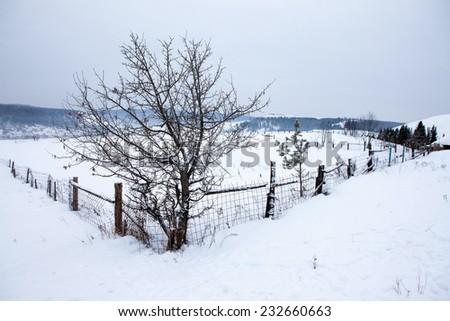Winter village scene - stock photo