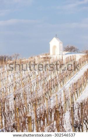 winter vineyard near Hnanice, Southern Moravia, Czech Republic - stock photo