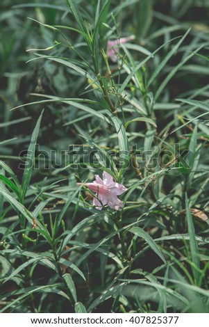 winter vintage flower - stock photo