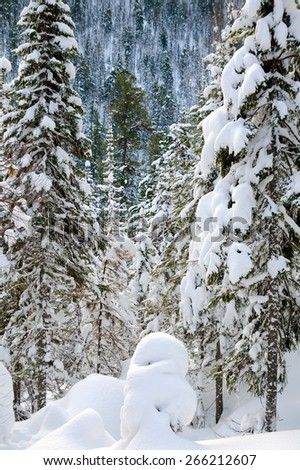 winter wild snow covered firtree forest - stock photo