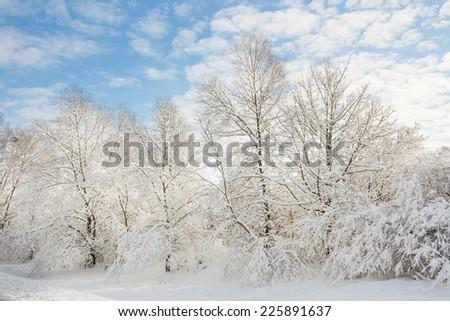 winter wonder land - magic forest - stock photo