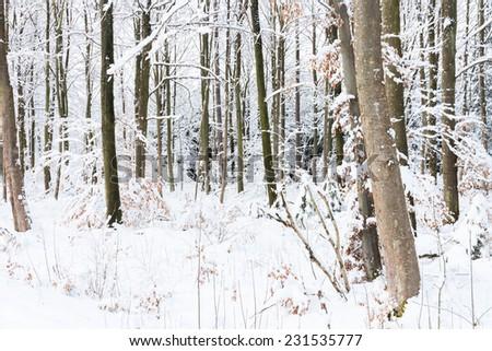 winter wonder land - trucks in snowy forest - stock photo