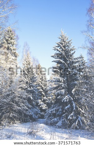 Winter wonderland in Finland. An image of trees covered with snow on a sunny afternoon. The sun is about to go down. Image has a vintage effect applied. - stock photo