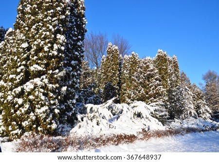 "Winter wonderland in USA.  The storm - dubbed ""Snowzilla"" - walloped a dozen states. US blizzard.  - stock photo"