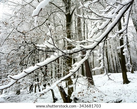 Winter Woodland - stock photo